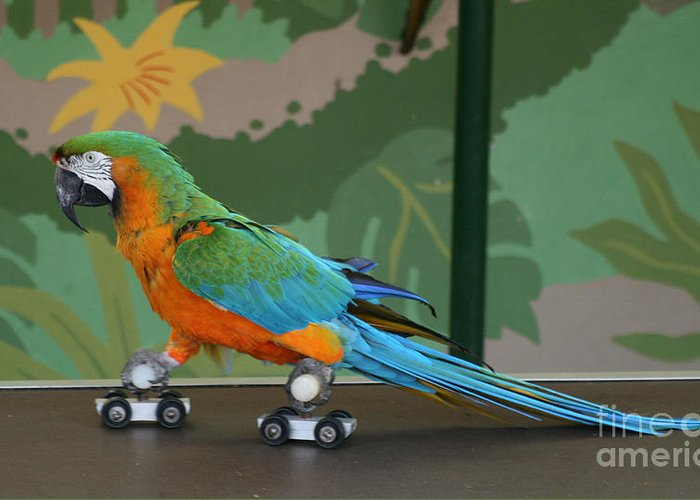 Parrot Greeting Card featuring the photograph Parrot On Skates by Ruth Hallam