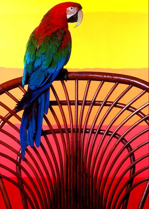 Parrot Greeting Card featuring the photograph Parrot Sitting On Chair by Garry Gay