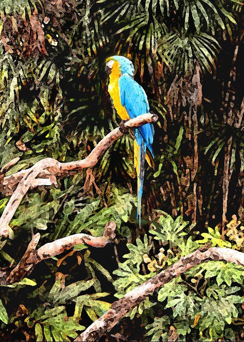 Parrot Greeting Card featuring the photograph Parrot by Steve Karol