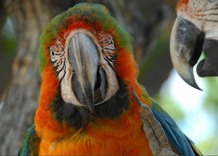Parrot Greeting Card featuring the photograph Parroting Information by Donna Blackhall