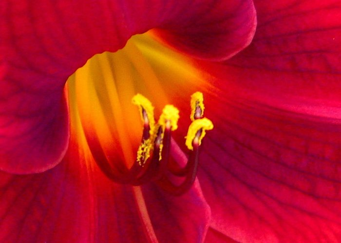Floral Greeting Card featuring the photograph Passion by Marla McFall