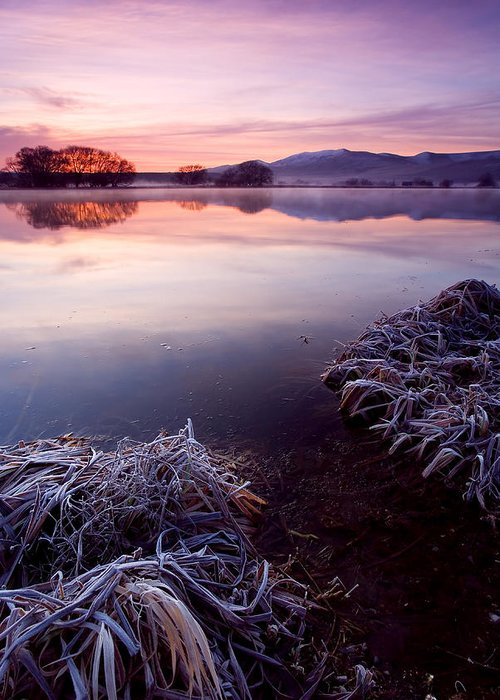 Lake Greeting Card featuring the photograph Pastel Dawn by Mike Dawson