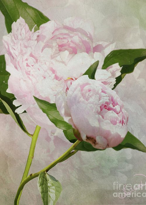 Digital Greeting Card featuring the digital art Pastel Peonies by Judy Brand