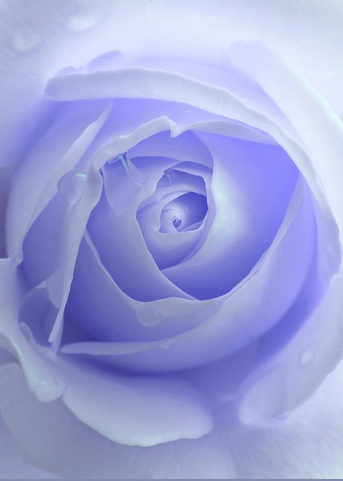 Rose Greeting Card featuring the photograph Pastel Purple Rose Flower by Jennie Marie Schell