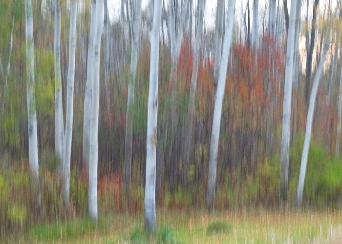 Movement Greeting Card featuring the photograph Pastel Tree Abstract by David T Wilkinson
