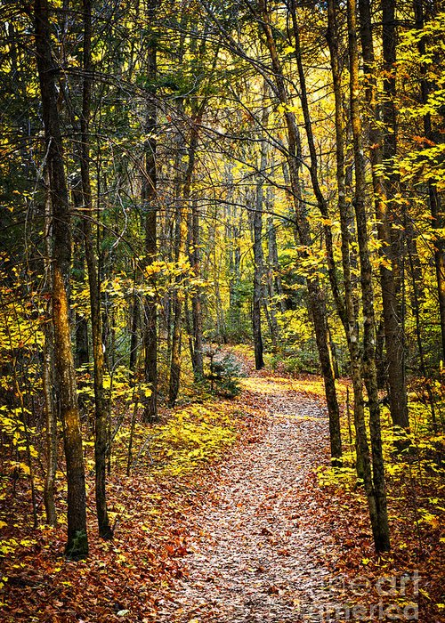Trees Greeting Card featuring the photograph Path In Fall Forest by Elena Elisseeva