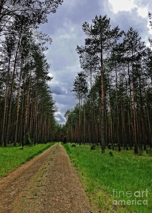 Greeting Card featuring the photograph Path To Nowhere by Zbigniew Krol