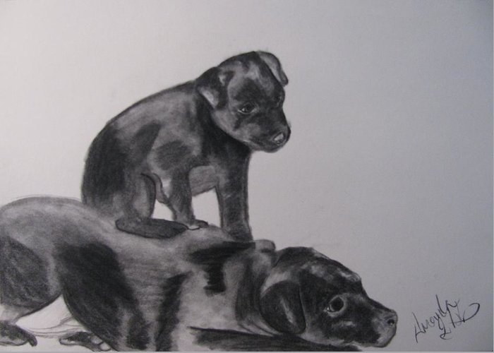 Puppies Greeting Card featuring the drawing Patterdales by Amanda Burek