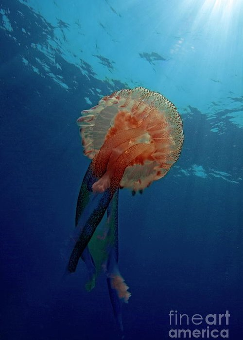 Animal Greeting Card featuring the photograph Patterned Luminescent Jellyfish by Sami Sarkis