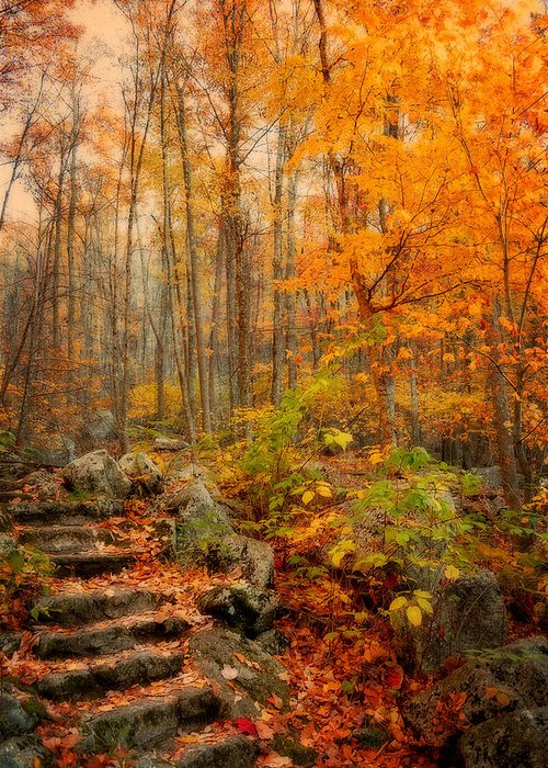 Fall Greeting Card featuring the photograph Peaceful Pathway by Kathy Jennings