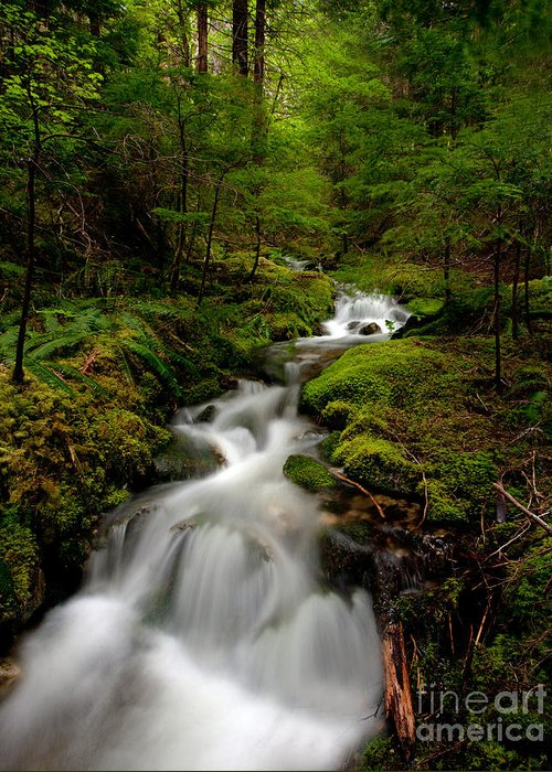 Cascades Greeting Card featuring the photograph Peaceful Stream by Mike Reid