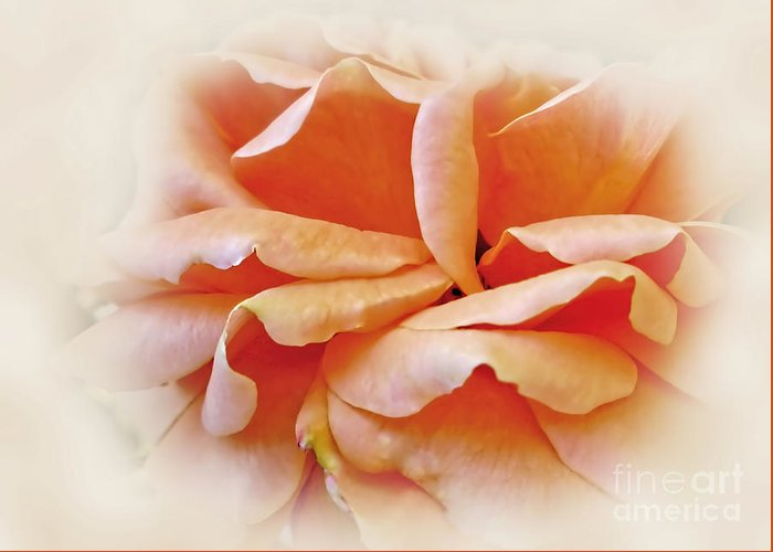 Photography Greeting Card featuring the photograph Peach Delight by Kaye Menner