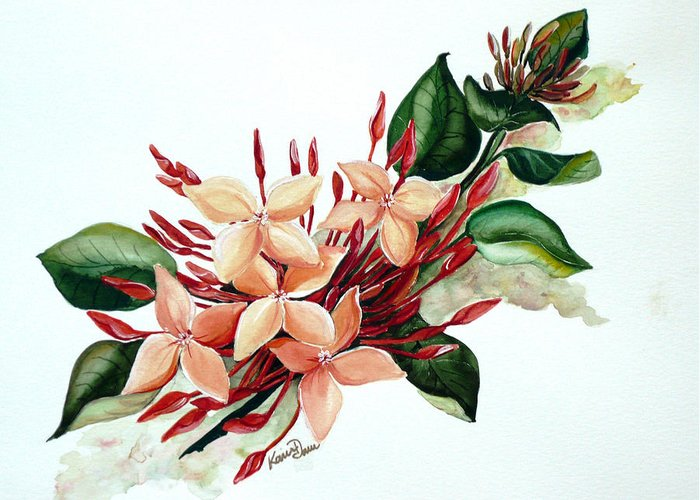 Floral Peach Flower Watercolor Ixora Botanical Bloom Greeting Card featuring the painting Peachy Ixora by Karin Dawn Kelshall- Best