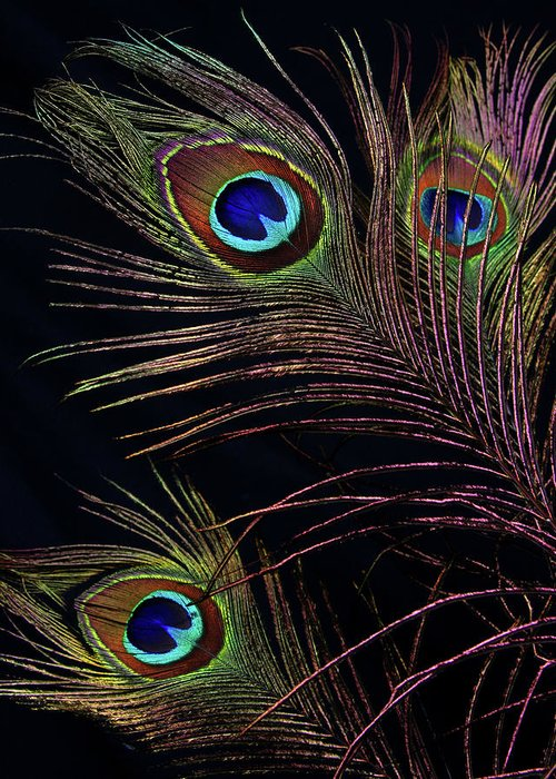 Photograph Greeting Card featuring the photograph Peacock 5 by Stormshade Designs