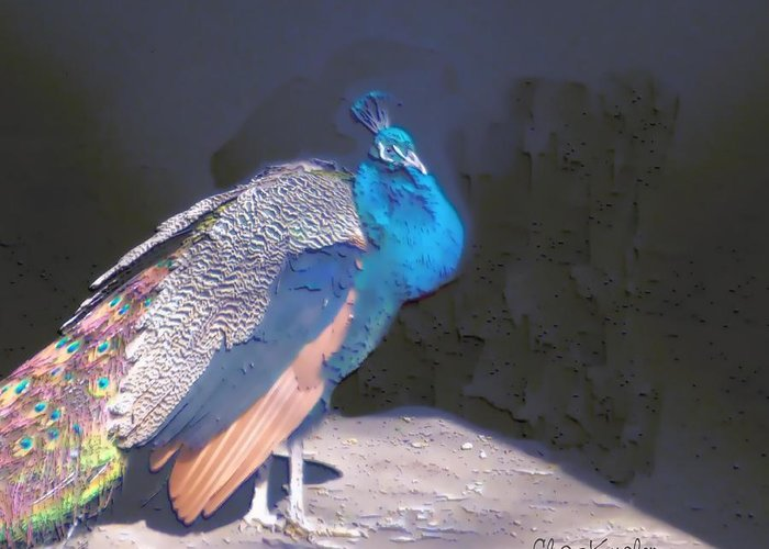 Bird Greeting Card featuring the painting Peacock by Chuck Kugler