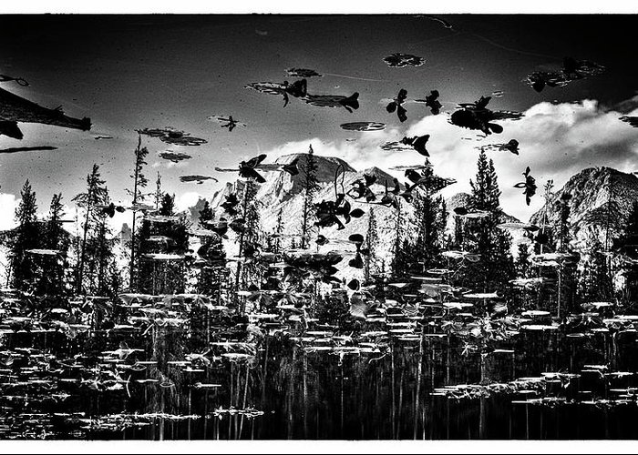 An Inverted Black And White Image Featuring Mountain Peaks Reflected On A Lily Pad Laden Pond In Colorado's Rocky Mountain National Park. Greeting Card featuring the photograph Peaks And Pads by Kevin Munro