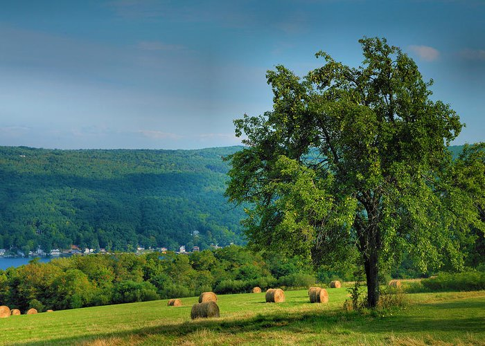 Hay Greeting Card featuring the photograph Pear Tree And Hayfield by Steven Ainsworth