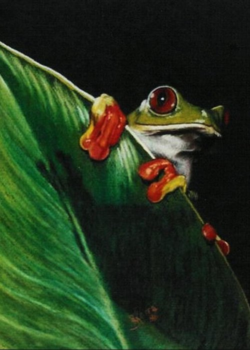 Frog Greeting Card featuring the drawing Peek-a-boo by Barbara Keith
