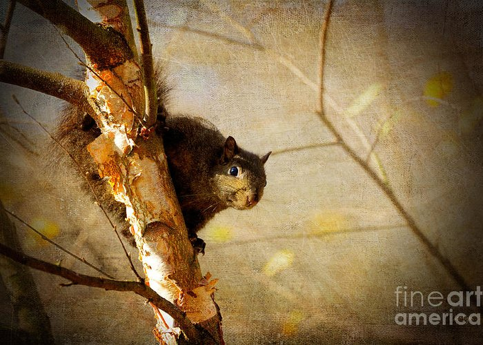 Squirrel Greeting Card featuring the photograph Peek-a-boooo by Lois Bryan