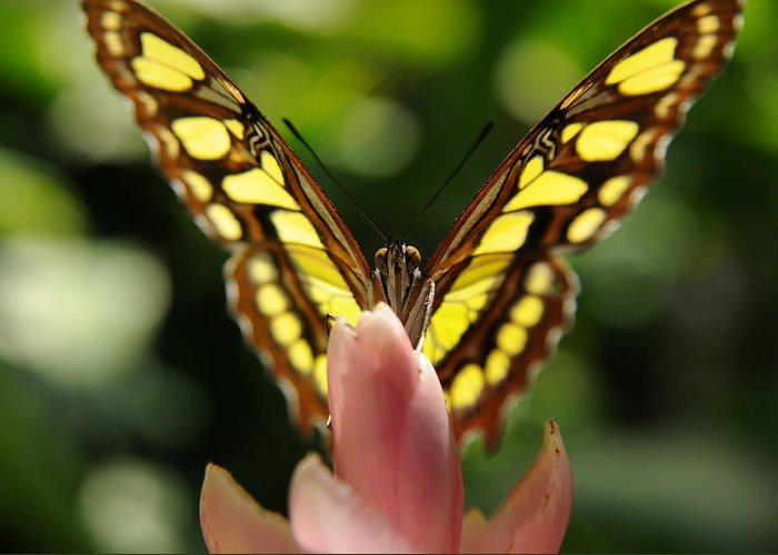Butterfly Photograph Image Art Greeting Card featuring the photograph peeking Butterfly by Patrick Short