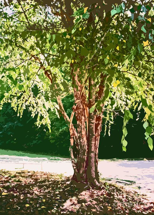 Birch Greeting Card featuring the photograph Peely Tree by Beebe Barksdale-Bruner