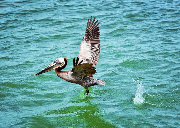 Pelican Taking Flight Greeting Card featuring the photograph Pelican Taking Flight by Steven Michael