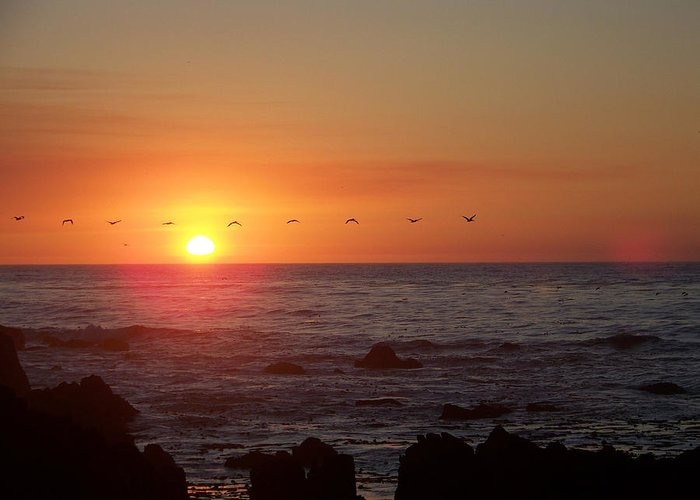 Sunsets Greeting Card featuring the photograph Pelicans In Flight by Maggie Cruser