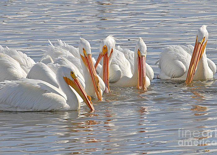 Bird Greeting Card featuring the photograph Pelicans On The Prowl by Dennis Hammer