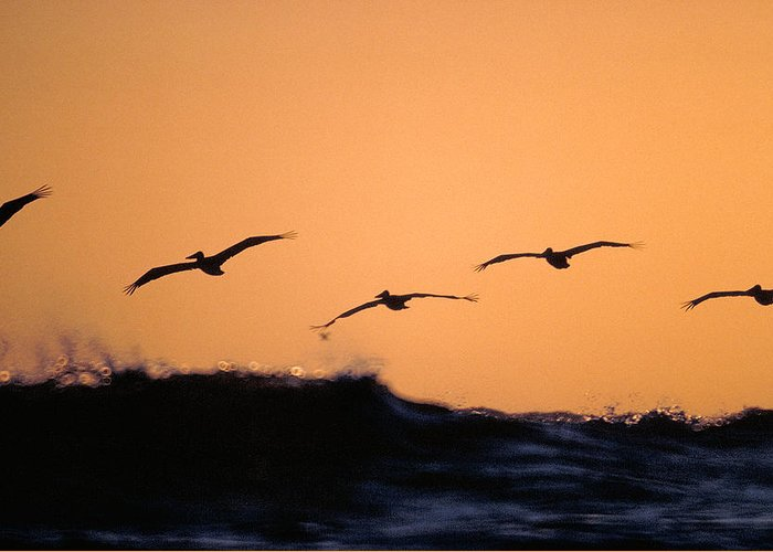 Pelicans Greeting Card featuring the photograph Pelicans Over The Pacific by Michael Mogensen