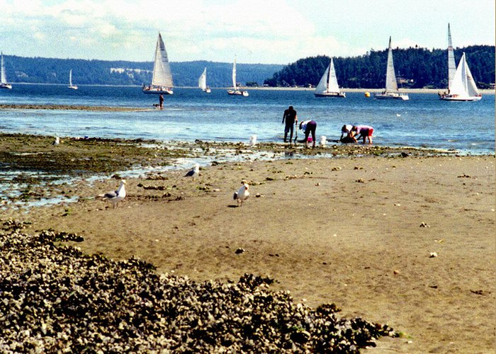 Landscape Greeting Card featuring the photograph Penn Cove Clamming by Valerie Moore