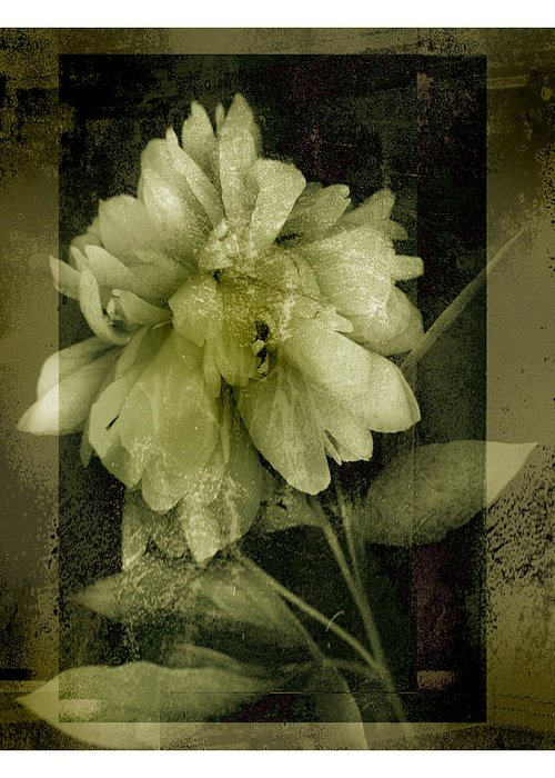 Flowers Greeting Card featuring the photograph Peony II Redux by Geoff Ault