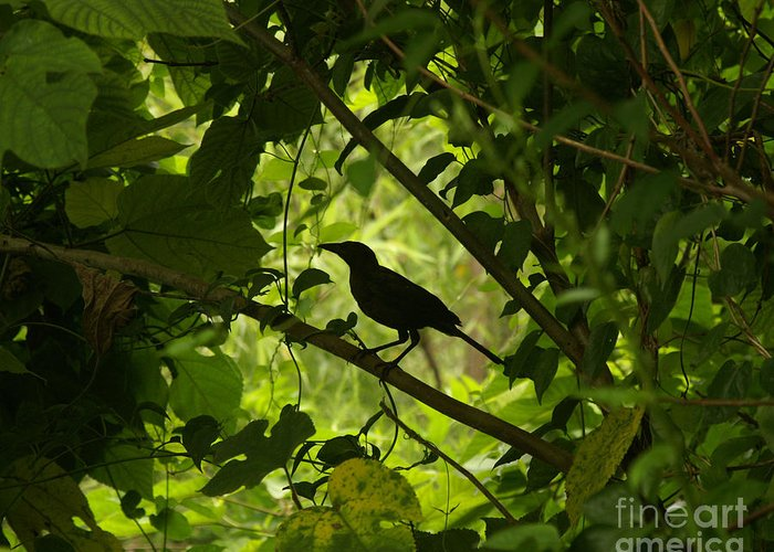Arboraceous Greeting Card featuring the photograph Perched In Green by Jack Norton