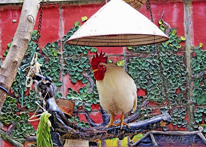 Vietnam Greeting Card featuring the photograph Perched Rooster by Claude LeTien