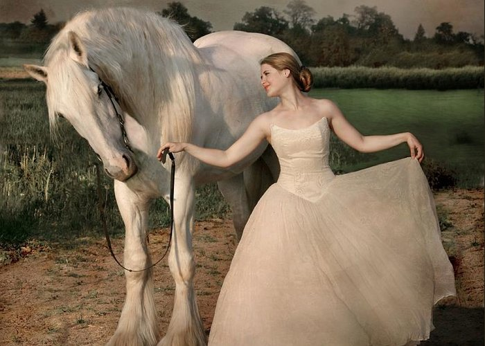 White Horse Greeting Card featuring the photograph Perfect Dancers by Dorota Kudyba