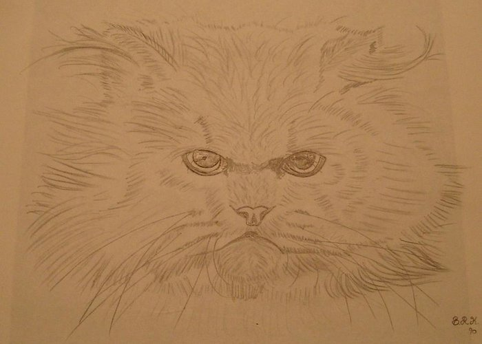 Cat Greeting Card featuring the painting Persian Cat 4 by Bo Klinge