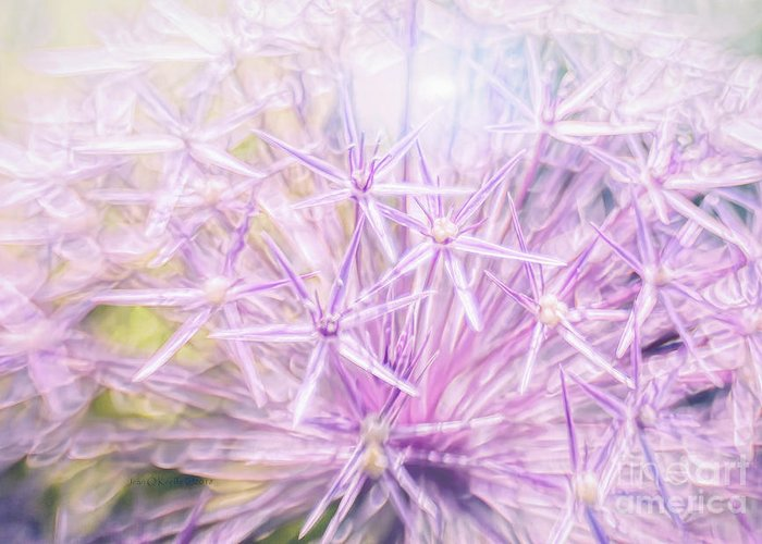 Allium Greeting Card featuring the photograph Persian Stars by Jean OKeeffe Macro Abundance Art