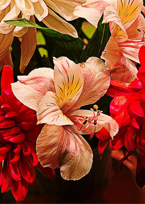 Yellow Greeting Card featuring the photograph Peruvian Lily Grain by Bill Tiepelman