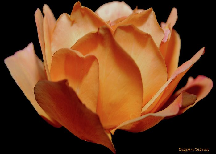 Rose Greeting Card featuring the digital art Petals Of Orange Sorbet by DigiArt Diaries by Vicky B Fuller