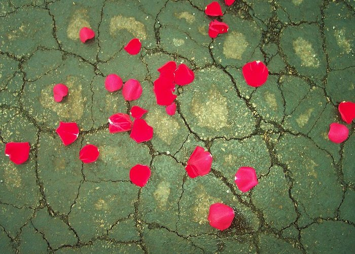 Red Rose Petals Asphalt Abstract Flowers Greeting Card featuring the photograph Petals On Asphalt by Anna Villarreal Garbis