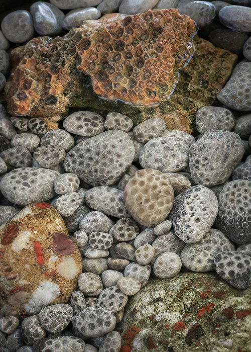 Petoskey Stones Greeting Card featuring the photograph Petoskey And Pudding Stones by William Christiansen