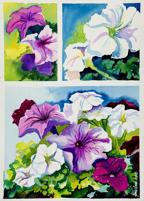 Flower Greeting Card featuring the painting Petunias In Summer by Janis Grau