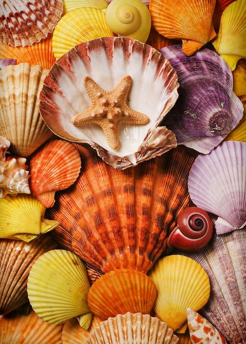 Seashells Greeting Card featuring the photograph Pile Of Seashells by Garry Gay