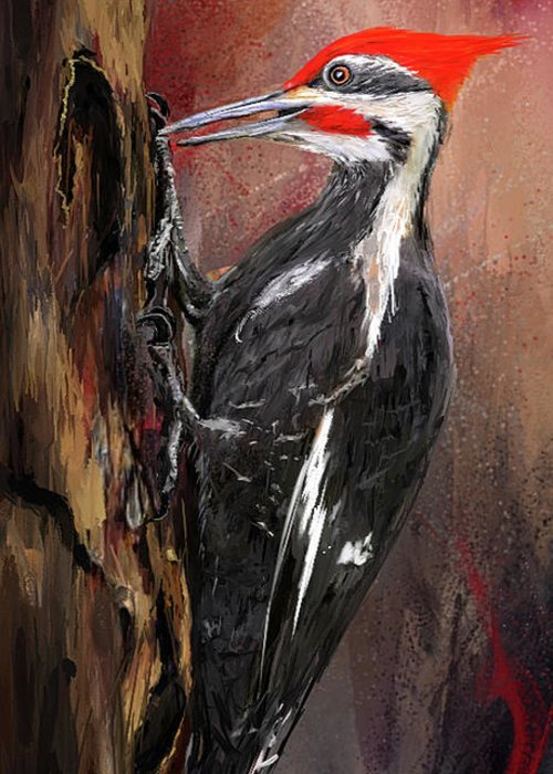 Pileated Woodpecker Greeting Cards