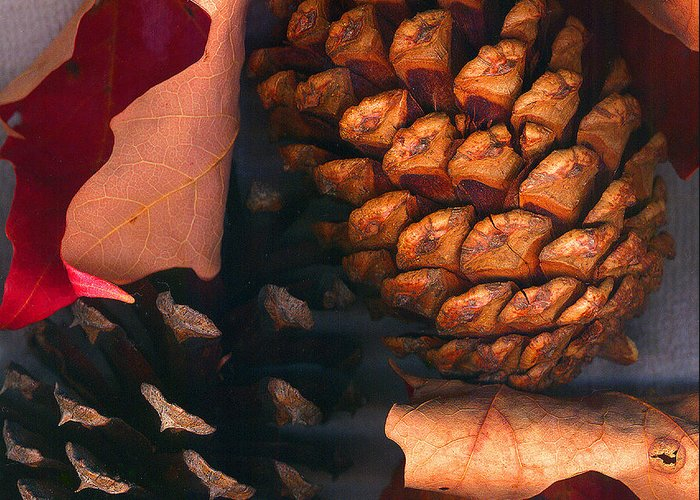 Pine Cones Greeting Card featuring the photograph Pine Cones And Leaves by Nancy Mueller