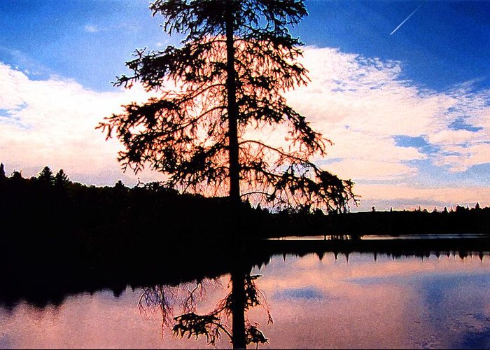 Landscape Greeting Card featuring the photograph Pine Tree By Peck Lake 5 by Lyle Crump