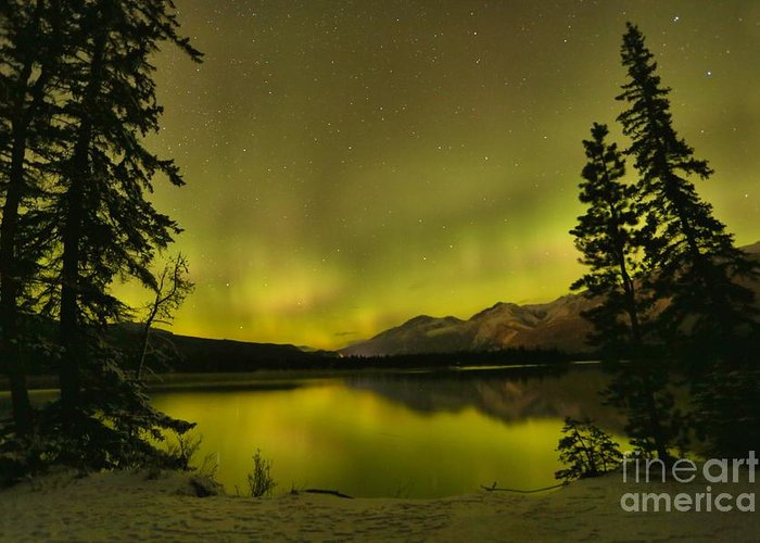 Canadian Northern Lights Greeting Card featuring the photograph Pine Tree Silhouettes by Adam Jewell