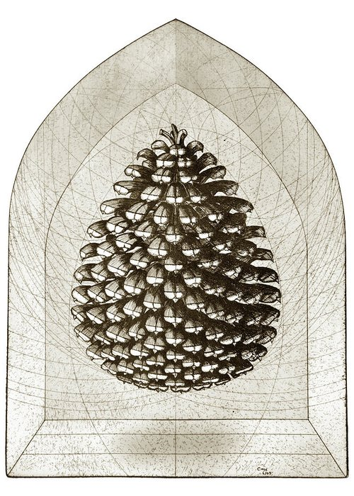 Pine Greeting Card featuring the drawing Pinecone by Charles Harden