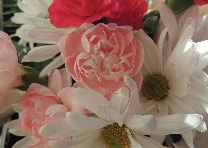 White Daisies Greeting Card featuring the photograph Pink Baby by Traci Hallstrom