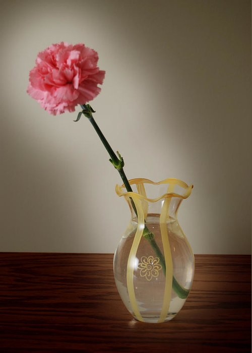 Flower Greeting Card featuring the photograph Pink Carnation by Dave Chafin