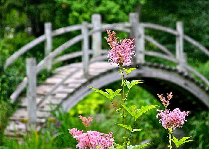 Bridge Greeting Card featuring the photograph Pink Flower by Robert Joseph